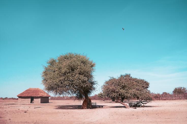 tree-3289468_1920